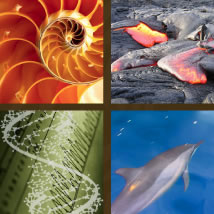 Photos: Nautilus Shell, Lava flows, DNA and Dolphins