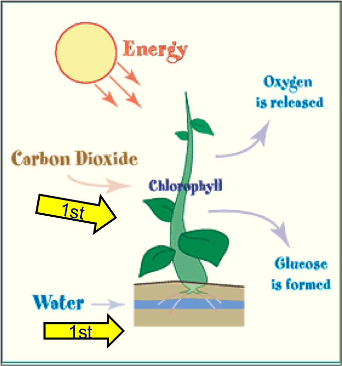 Plants Absorbing Carbon Dioxide images
