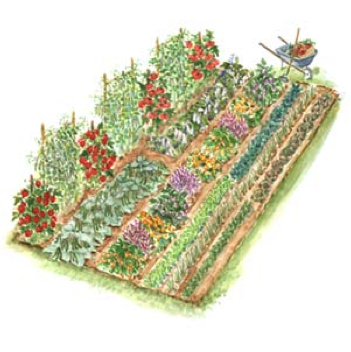 Garden plots for Layout garden plots