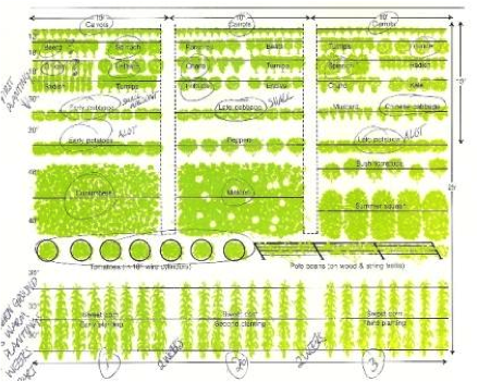 Image Result For How To Plan A Flower Garden Plot